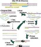 Pictures of Dna Sequencing Taq Polymerase
