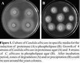 Pictures of Taq Polymerase Activity 37