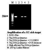One Unit Taq Polymerase Photos