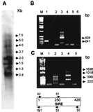 Pictures of Invitrogen Taq Polymerase Manual