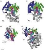 Pictures of Blue Taq Polymerase