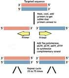 Images of Taq Polymerase In Pcr Reaction
