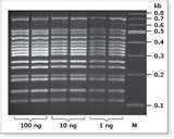 Photos of Taq Polymerase In Pcr Reaction