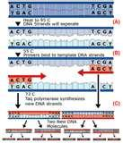 Pictures of Different Types Taq Polymerase