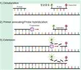Taq Polymerase Transformation Pictures