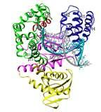 Pictures of Taq Polymerase Ta