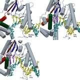 Pictures of Different Taq Polymerases