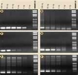 Images of Biocompare Taq Polymerase