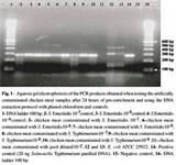 Pictures of Fermentas Taq Polymerase Pcr Protocol