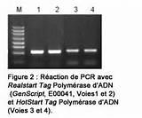 Isolation Taq Polymerase Photos