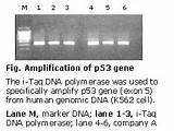 I Taq Polymerase Intron Pictures